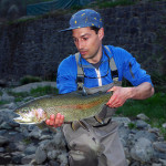 wild rainbow trout, Idrijca river