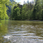 Flats of the Sava Bohinjka, May