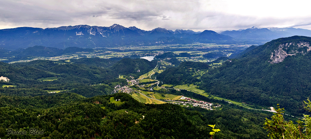 The valley of the Sava Bohinjka river