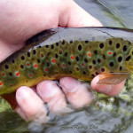 Tenkara style fly fishing loves the Radovna river