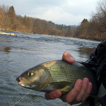 Strong grayling`s habitate - Sava river