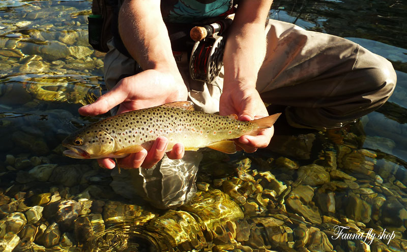 brown-trout-07