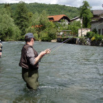 Fighting trout of the Krka river