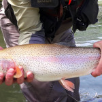featured-trout